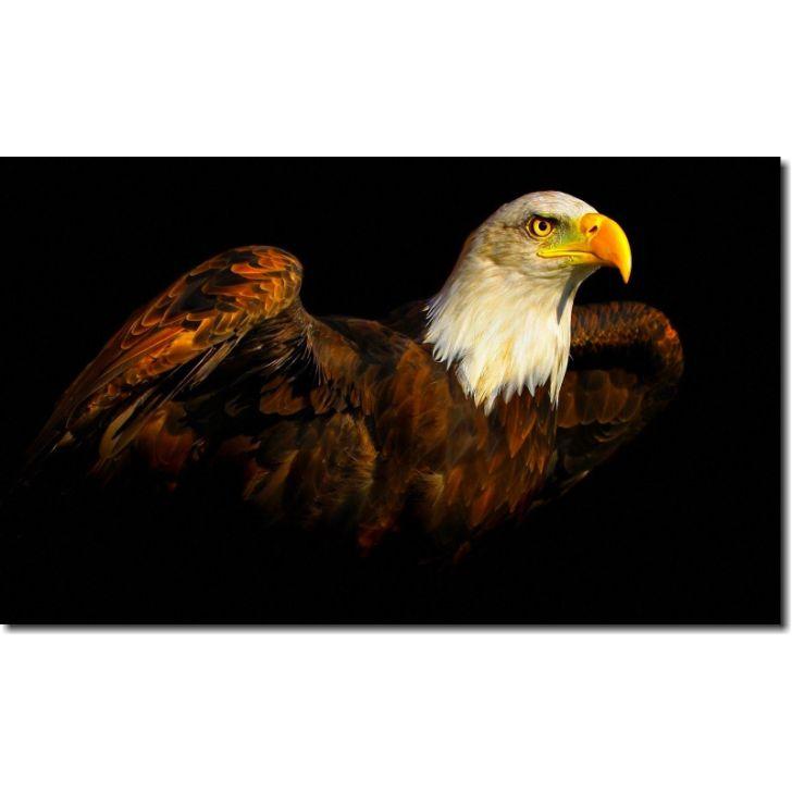 63a619617 Quadro Decorativo Paisagem Pássaro Águia Para Quarto E Sala 1 Peça