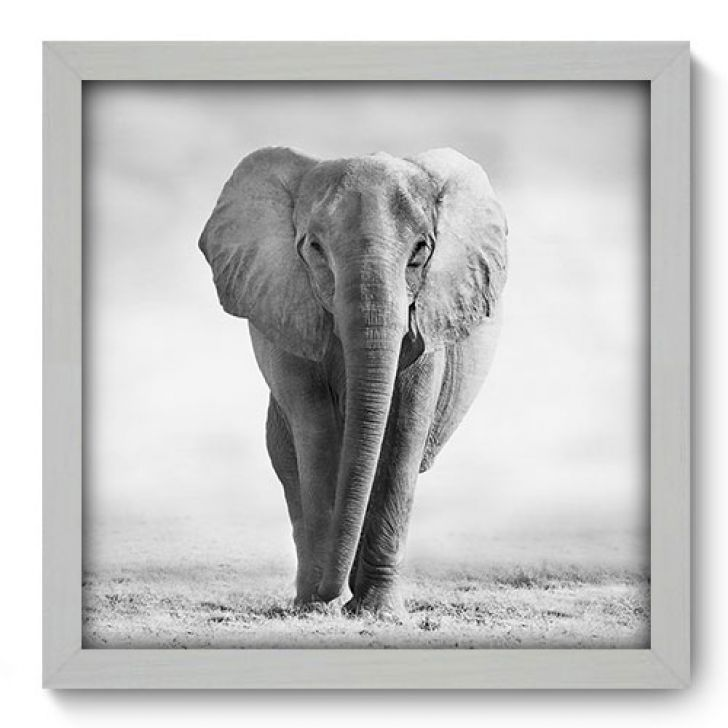 //staticmobly.akamaized.net/p/Allodi-Quadro-Decorativo---Elefante---076qdsb-1110-357182-1-zoom.jpg